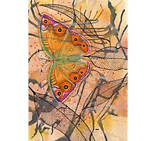 """Meadow Argus""  Photographic Print"