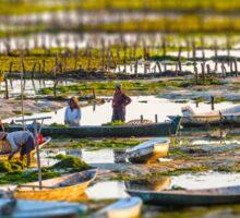 Seaweed Farmers at Nusa Lembongan Sticker