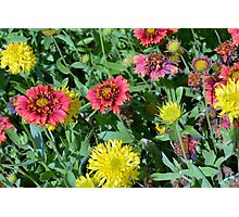 Colorful flowers in the garden. Photographic Print