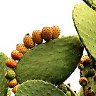 Prickly Pear Cactus with Fruit by Martha Sherman