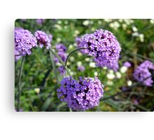 Purple spring flowers in the garden. Canvas Print