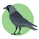 Jackdaw by threeblackdots
