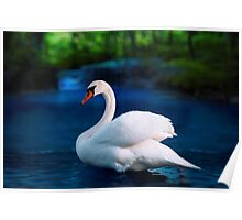 White swan in the lake with beautiful landscape Poster