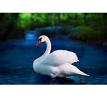 White swan in the lake with beautiful landscape Photographic Print