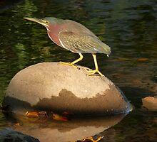 birds II - parajos by Bernhard Matejka