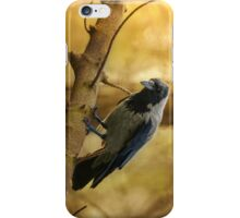 Crow on the branch iPhone Case/Skin