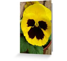 YELLOW TWO TONE PANSY Greeting Card