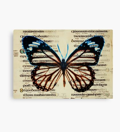 Northumberland Butterfly Canvas Print