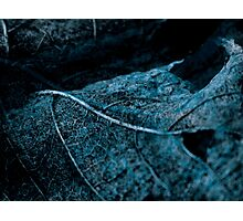 Lucid Nature Collection 3/10 Photographic Print