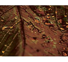 Lucid Nature Collection 4/10 Photographic Print