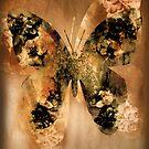 Golden Butterfly by CarolM