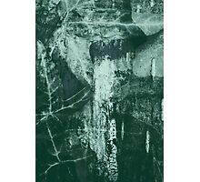 Lucid Nature Collection 10/10 Photographic Print