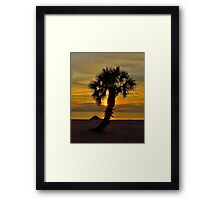 Lone Palm @ Sunset Framed Print