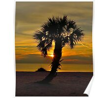 Lone Palm @ Sunset Poster