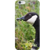 Canada goose eating leaves iPhone Case/Skin