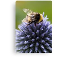 The Bumblebee's Globe Canvas Print