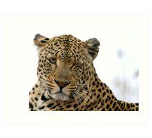 Can Leopards Wink? Art Print