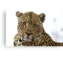 Can Leopards Wink? Canvas Print