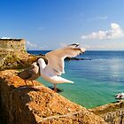 Even Seagulls Get Nagged....!!!! by brimel55