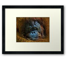 Feeling kind of blue today, will you be my friend? Framed Print