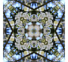 Nature Mandala IX Photographic Print