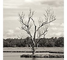 Flooded Tree Photographic Print