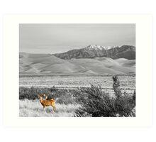 Great Colorado Sand Dunes Deer Art Print