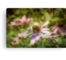 Echinacea - textured Canvas Print