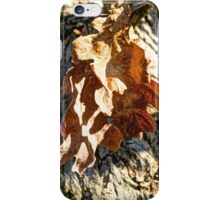 Autumn Oak iPhone Case/Skin
