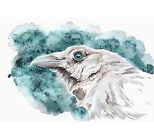 White raven Photographic Print