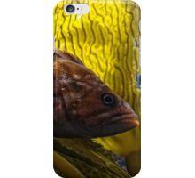 who you callin' a bad bass? iPhone Case/Skin