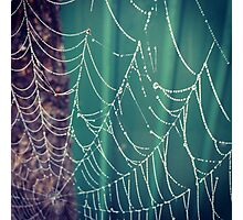 Spider's web Photographic Print