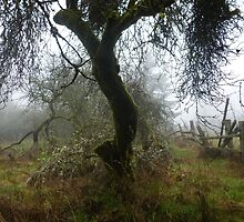 The Old Foggy Orchard by Elaine Bawden