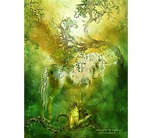 Unicorn Of The Forest Photographic Print