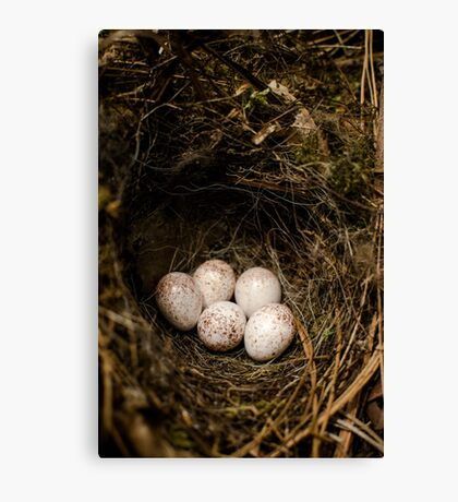Bird Eggs Canvas Print