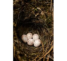 Bird Eggs Photographic Print