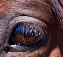 Eye See You - Horse Photography Sticker