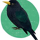 Starling by threeblackdots