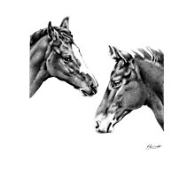 Foal Friends Photographic Print