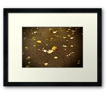 Maple leaves in autumn Framed Print
