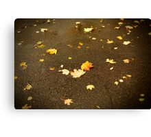 Maple leaves in autumn Canvas Print