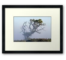 Touched by morning light - Barrabool Hills Framed Print