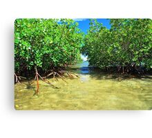 Tropical Waters Canvas Print