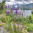 A Lythrum in Queenstown. by Larry Lingard-Davis
