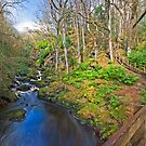 Ness Woods River by Ciaran Sidwell