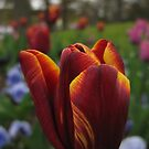 Spring Glory by KMorral