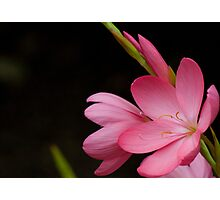 Blooming Flower Photographic Print