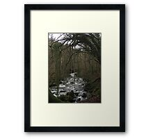 Reaching for water Framed Print