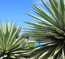 Aloe Vera plant at the beach Sticker
