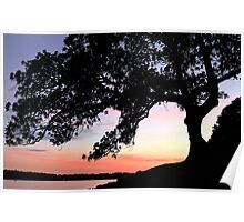 Fig Tree Silhouette Poster